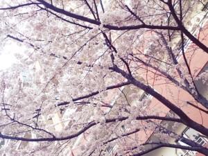 2014-03-31-17-01-06_deco